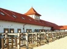 BIOFARM Horse Wellness Ranch